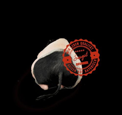 Свиньи BRUNNER